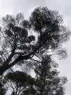 The Bob Ross tree