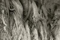 Elephantesque