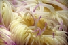 hrakleio_3_aquarium_knwssos_volta-424bc
